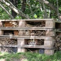 Bilder från byggandet av insektshotellet