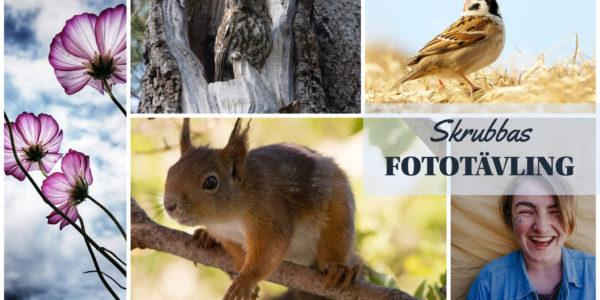 Vinnare i årets fototävling!
